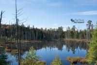 Moose Territory