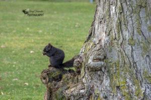 More Squirrels
