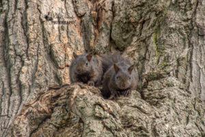 Even More Squirrels