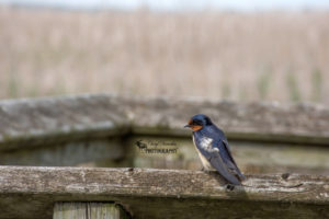 Point Pelee National Park – My second visit