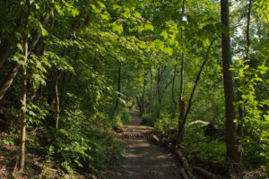The Coves Environmentally Significant Area – Summertime Visit