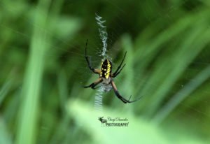 Springwater Conservation Area – Insects Galore !!