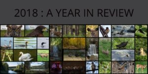 2018 : My Year in Review
