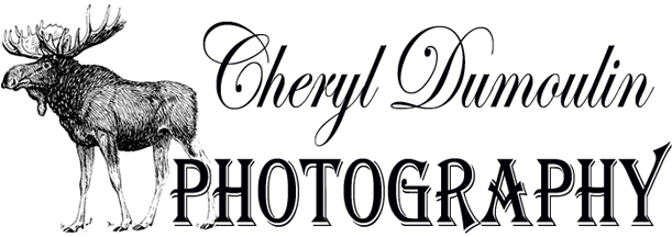 Cheryl Dumoulin Photography